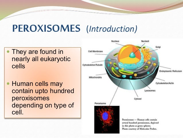 introduction to peroxisomes Key words: biogenesis, disease, function, inducibility introduction a peroxisome is a subcellular organelle bounded by one membrane and defined by its metabolism of hydrogen peroxide the following overview describes the peroxisome's properties, functions and formation for further details and references, see the.