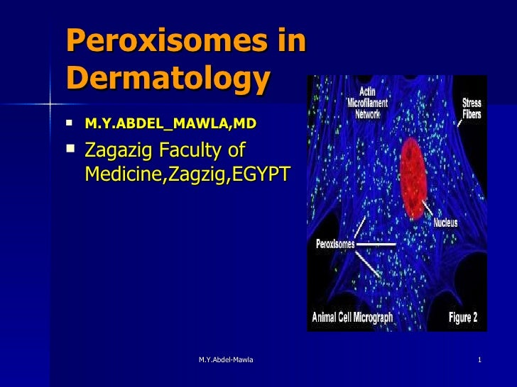 Peroxisomes in Dermatology <ul><li>M.Y.ABDEL_MAWLA,MD </li></ul><ul><li>Zagazig Faculty of Medicine,Zagzig,EGYPT </li></ul>