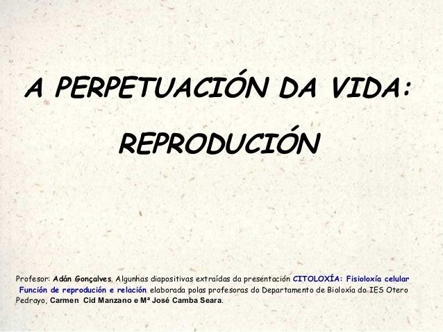 A PERPETUACIÓN DA VIDA: REPRODUCIÓN Profesor: Adán Gonçalves. Algunhas diapositivas extraídas da presentación CITOLOXÍA: F...