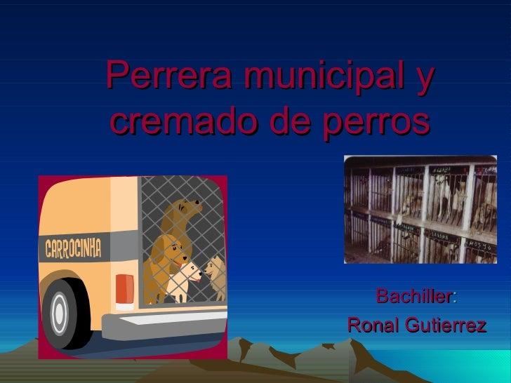 Perrera municipal y cremado de perros Bachiller : Ronal Gutierrez