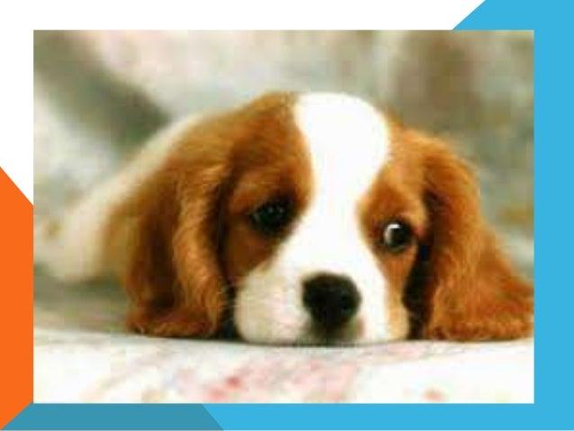 20 razas de perros yahoo dating 2
