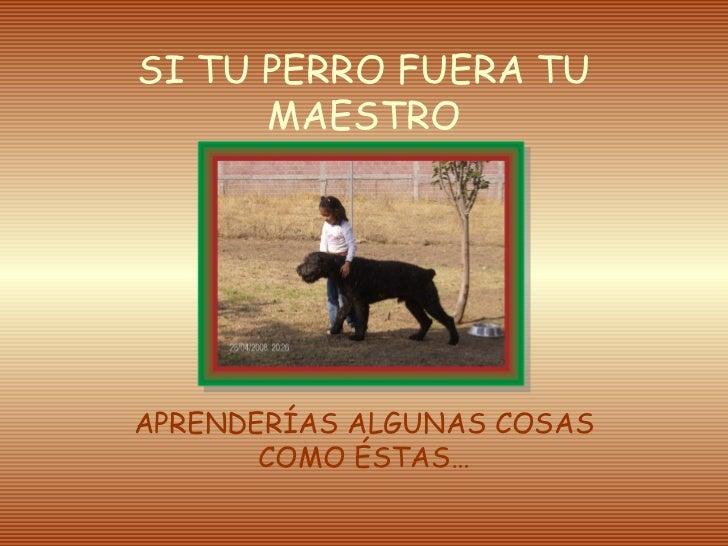Perromaestro 120215191433-phpapp01