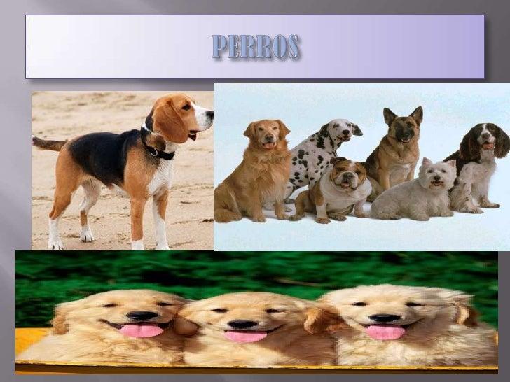 PERROS<br />