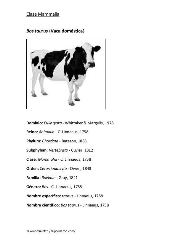 Clase MammaliaBos taurus (Vaca doméstica)Dominio: Eukaryota - Whittaker & Margulis, 1978Reino: Animalia - C. Linnaeus, 175...