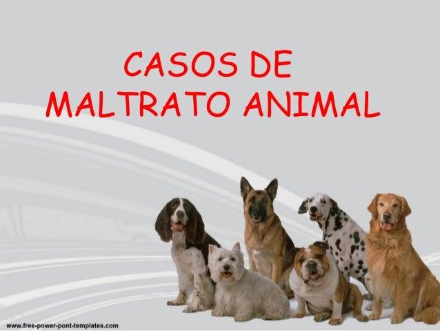 CASOS DE  MALTRATO ANIMAL