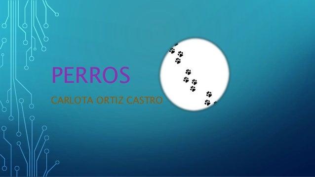 CARLOTA ORTIZ CASTRO PERROS