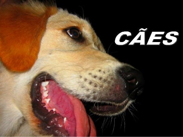 """"""" Uma vida sem cachorro é um erro"""" (Carl Zuckmayer)"""