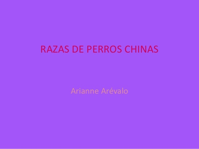 RAZAS DE PERROS CHINAS  Arianne Arévalo