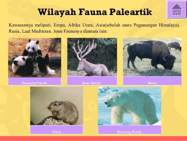 54+ Gambar Persebaran Fauna Neartik Paling Keren