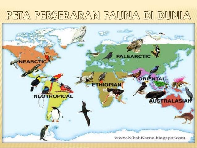 47+ Peta persebaran hewan endemik di indonesia terupdate