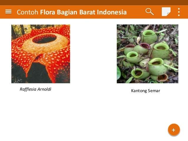 42 Contoh Gambar Flora Dan Fauna Di Indonesia Bagian Barat