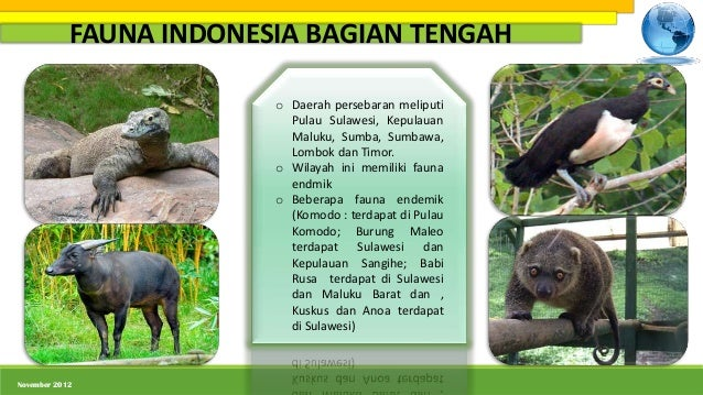 87 Gambar Wilayah Persebaran Flora Dan Fauna Di Indonesia Paling Hist
