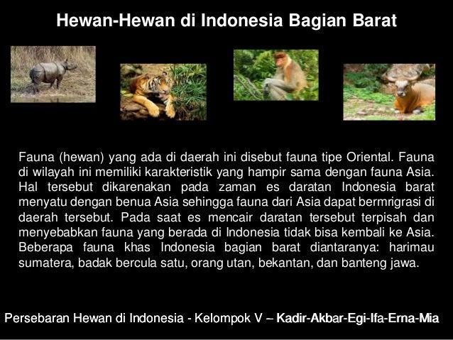 88 Koleksi Gambar Fauna Daerah Peralihan HD Terbaru