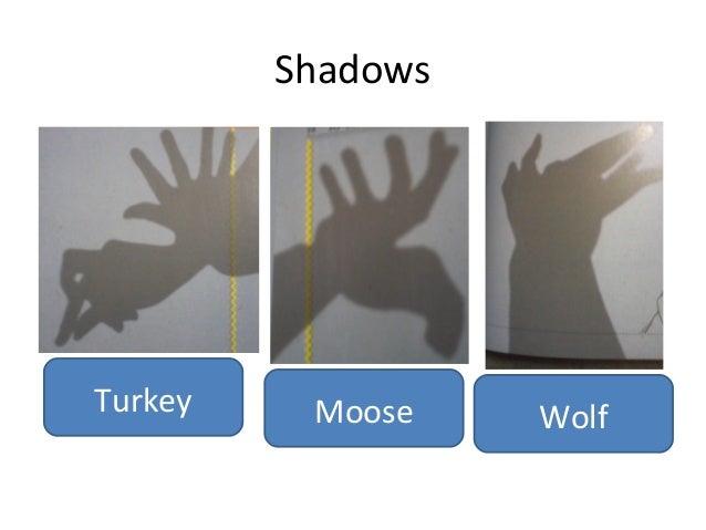 Shadows  Turkey  Moose  Wolf