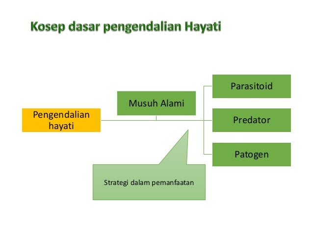 Pengendalian HAYATI SEBAGAI SALAH SATU KOMPONEN PENGENDALIAN HAMA TERPADU Slide 3