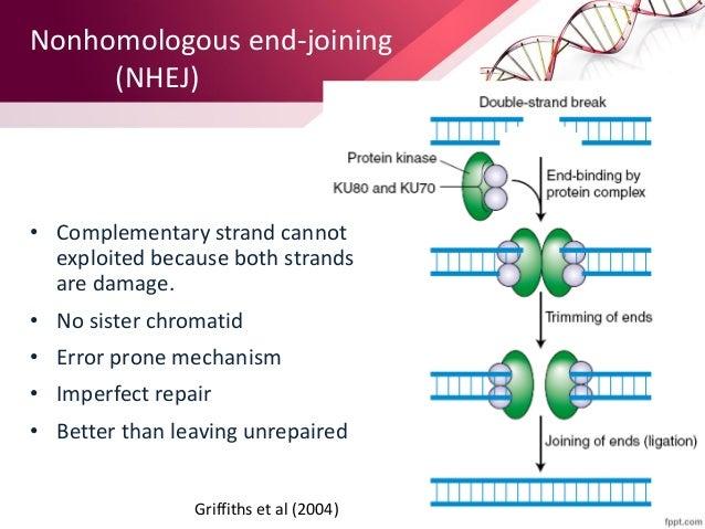 Mutation and DNA repair