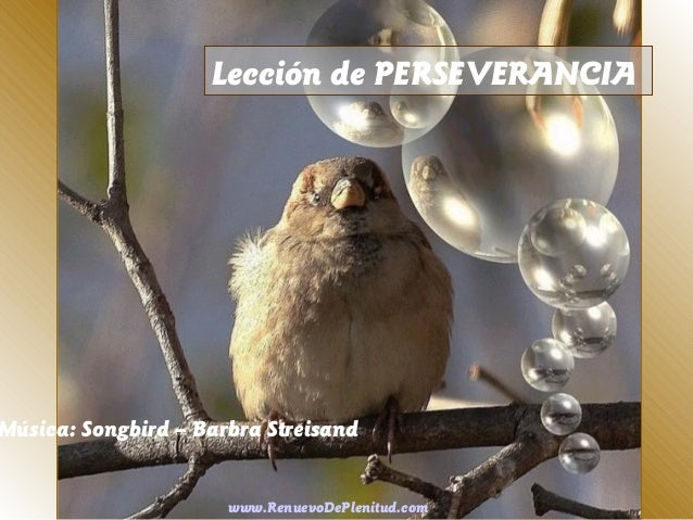 Lección de PERSEVERANCIA  Música: Songbird – Barbra Streisand www.RenuevoDePlenitud.com
