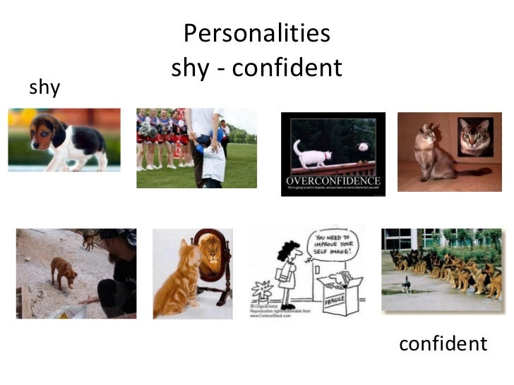 Personalities shy - confident shy confident