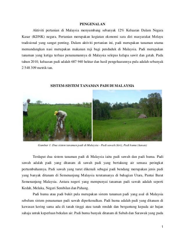 Asia Tenggara Dalam Transformasi Contoh Pertanian Padi