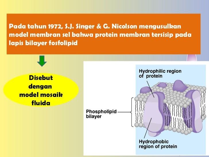 Membran sel ccuart Choice Image