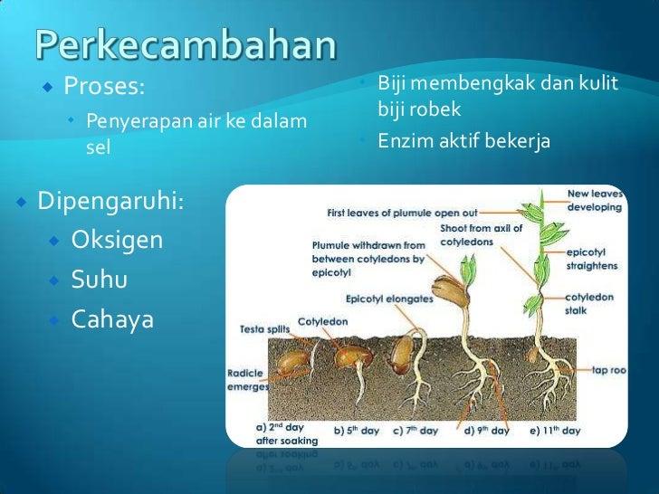 contoh hormon kortikosteroid