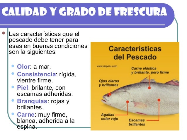pescado generalidades