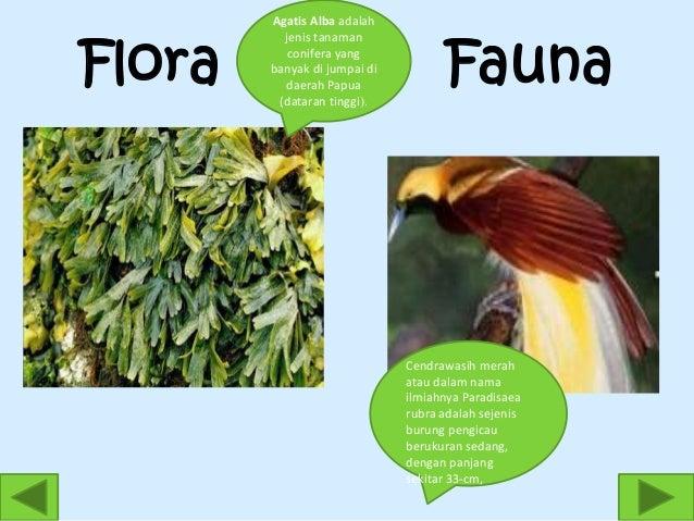 pesebaran flora dan fauna aslap 7 638 - Jenis Jenis Flora Dan Fauna