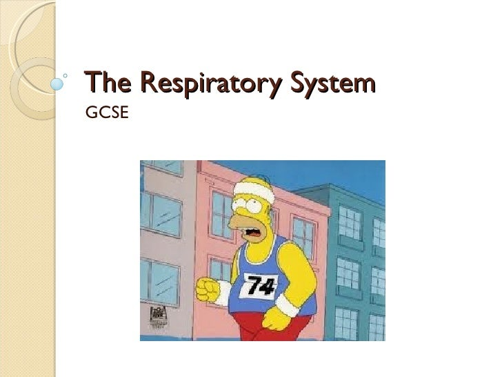 The Respiratory System  GCSE
