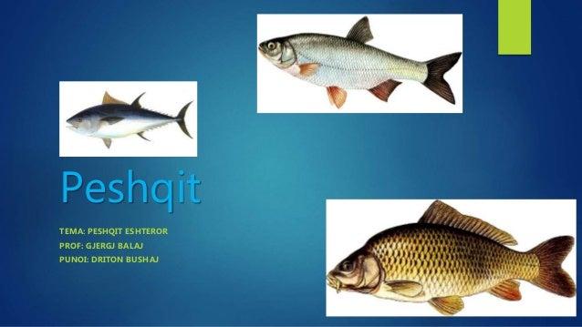 Peshqit TEMA: PESHQIT ESHTEROR PROF: GJERGJ BALAJ PUNOI: DRITON BUSHAJ