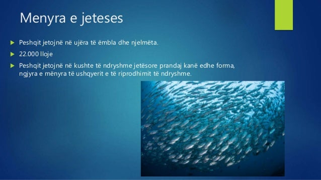 Peshqit D.Bushaj Slide 2