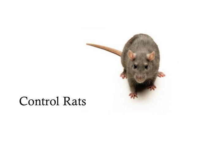Control Rats