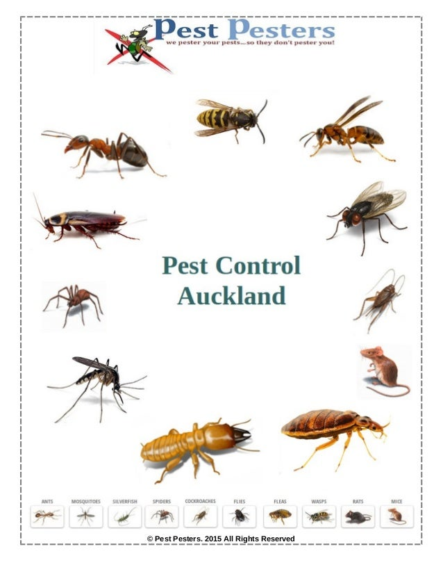 © Pest Pesters. 2015 All Rights Reserved