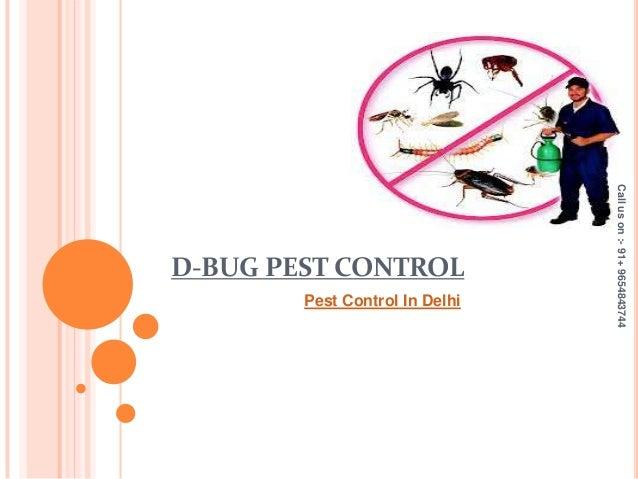 D-BUG PEST CONTROL Pest Control In Delhi Calluson:-91+9654843744