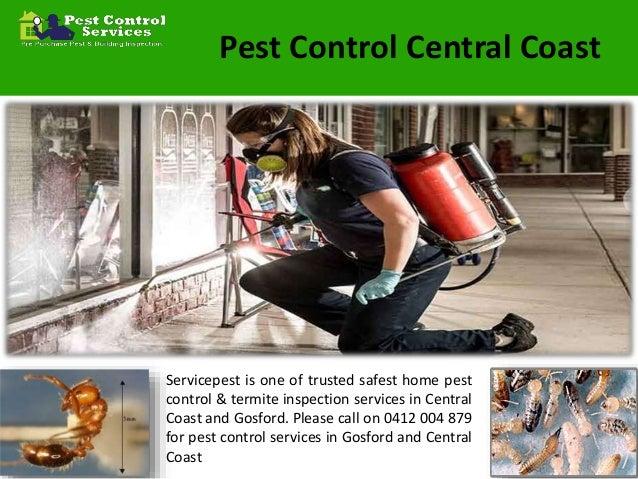 Pest Control Services New Castle