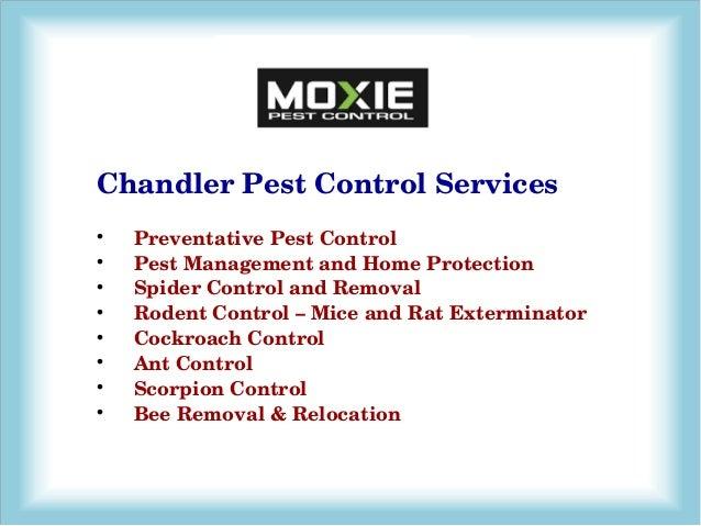 Pest Control Mesa AZ - Legacy Pest Control
