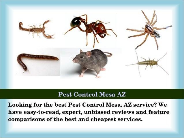 Mesa AZ Exterminator, Pest Control & Termite Inspector