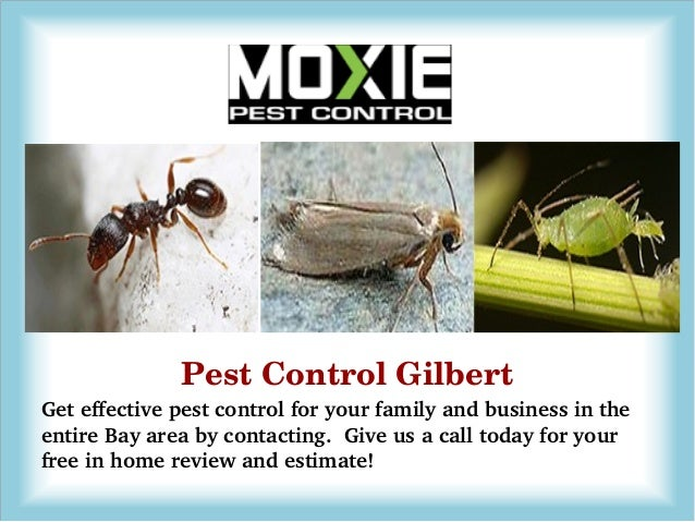 Canopy Pest Control