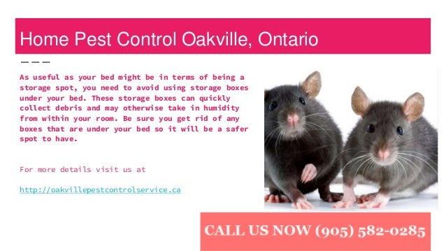Image result for pest control services near me rat