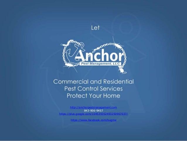 http://anchorpestmanagement.com 843-906-9457 https://plus.google.com/104539352493250967037/ https://www.facebook.com/bugme