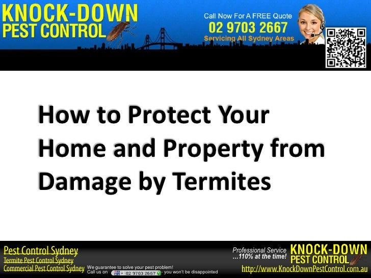 How to Protect YourHome and Property fromDamage by Termites                                                               ...