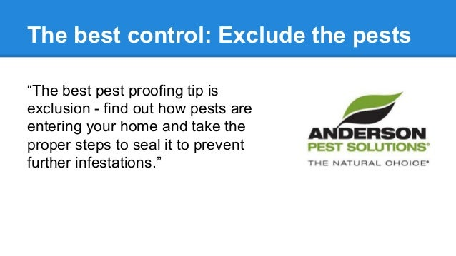 Pest Control Tips And Secrets From 117 Experts