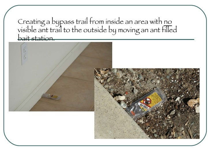 Creating a bypass trail from inside an area with  no  visible ant trail to the outside by moving an ant filled bait statio...