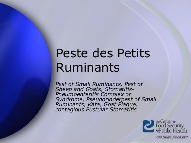 Peste des Petits Ruminants Pest of Small Ruminants, Pest of Sheep and Goats, Stomatitis- Pneumoenteritis Complex or Syndro...