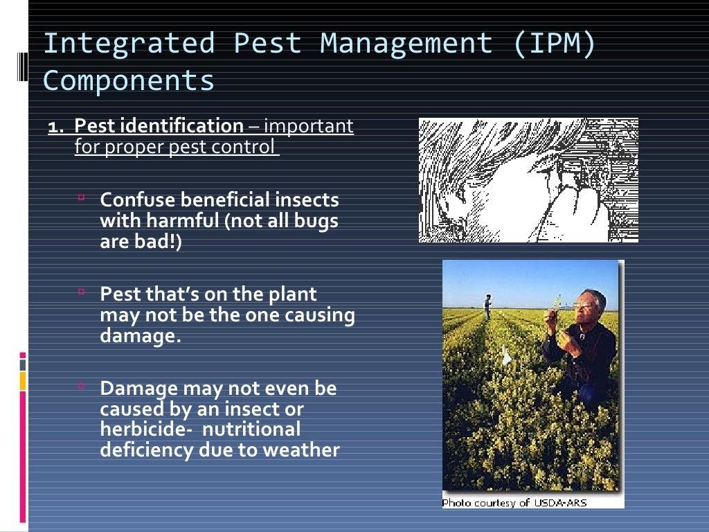 Pesticides (2) page 26