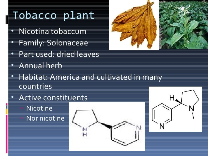  Drying process is done by curing. By curing a new    compound is formed called tobacco camphor,    which is responsible ...