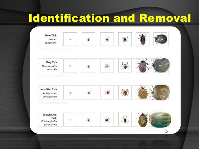 Predators bed bugs scabies and more lyme disease 22 prevention avoid direct contact repel ccuart Gallery