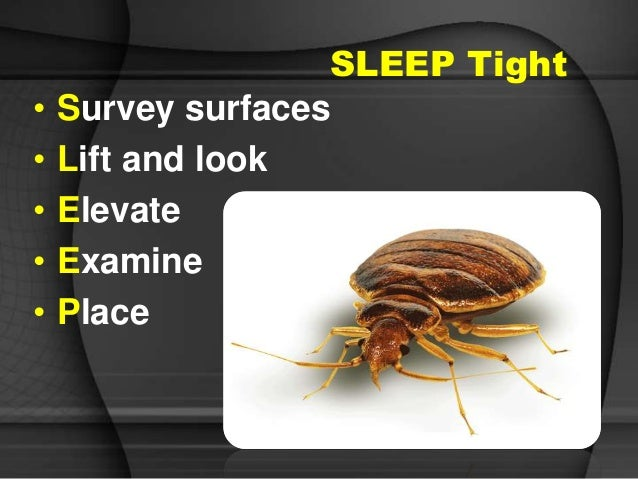 Predators Bed Bugs Scabies And More