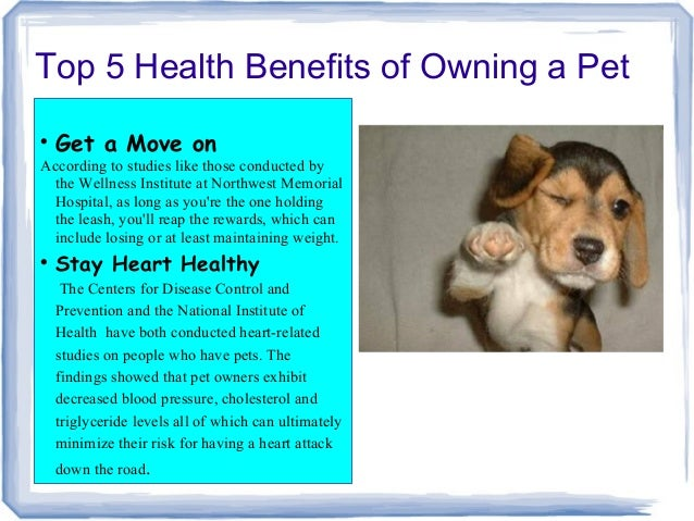 Having Dog Good For Health