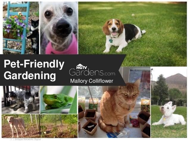 | Scripps Networks Digital1 Pet-Friendly Gardening Mallory Colliflower