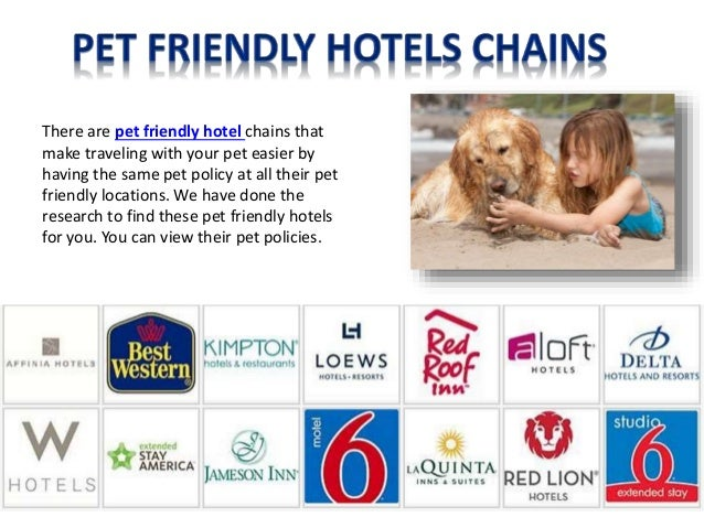 pet friendly policies pet friendly hotels guide. Black Bedroom Furniture Sets. Home Design Ideas